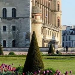 Château de Saint Germain en Laye | Bruno Decelle | arboriste grimpeur élagueur