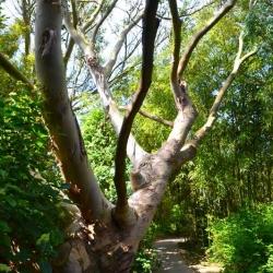 Jardin botanique de Vauville | Bruno Decelle | arboriste grimpeur élagueur