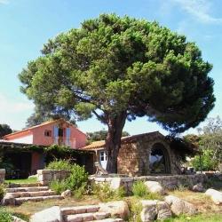 Corse, Bonifacio | Bruno Decelle | arboriste grimpeur élagueur